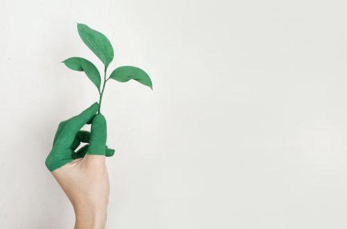 the importance of sustainability- e-commerce world-environment-fashion